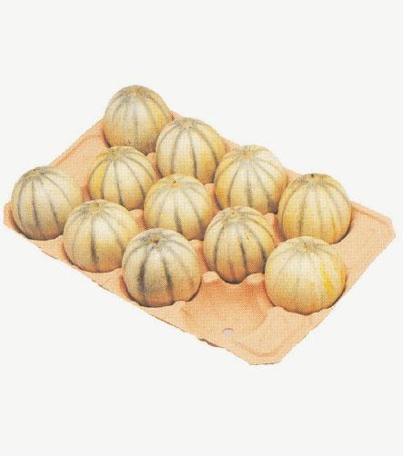 alveole melon
