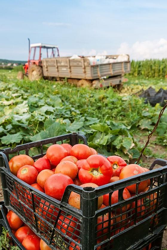 Cagette plastique fruits et legumes