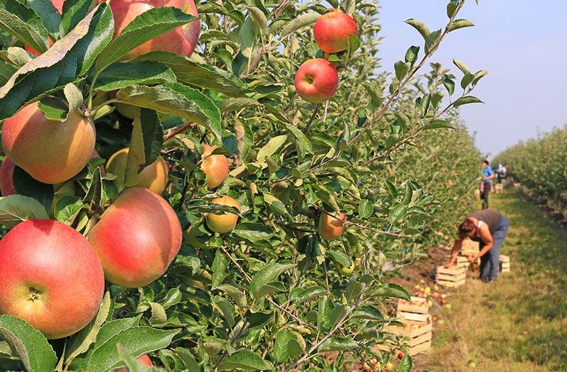 emballage fruit