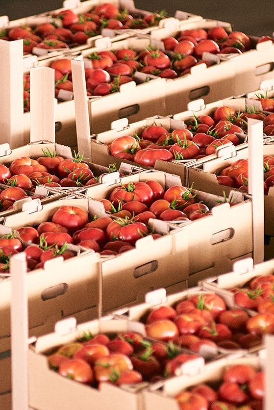 emballage fruits et legumes