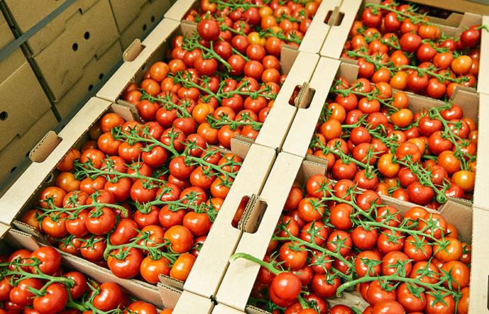 fournisseur carton tomate